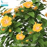Image for High quality 'Hibiscus'