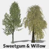 Image for Willow & Sweetgum Trees