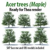 Image for Acer trees 15m (Maple)