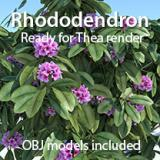 Image for Rhododendron bushes