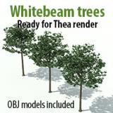 Image for Whitebeam trees