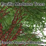 Image for Pacific Madrone